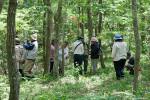 山野草を散策する参加者